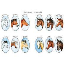 Hästar i stallet A4