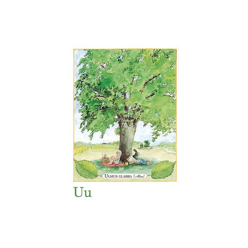 Ulmus glabra, Majas alfabet
