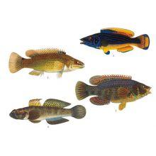 Abborartade fiskar 1