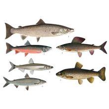 Laxartade fiskar