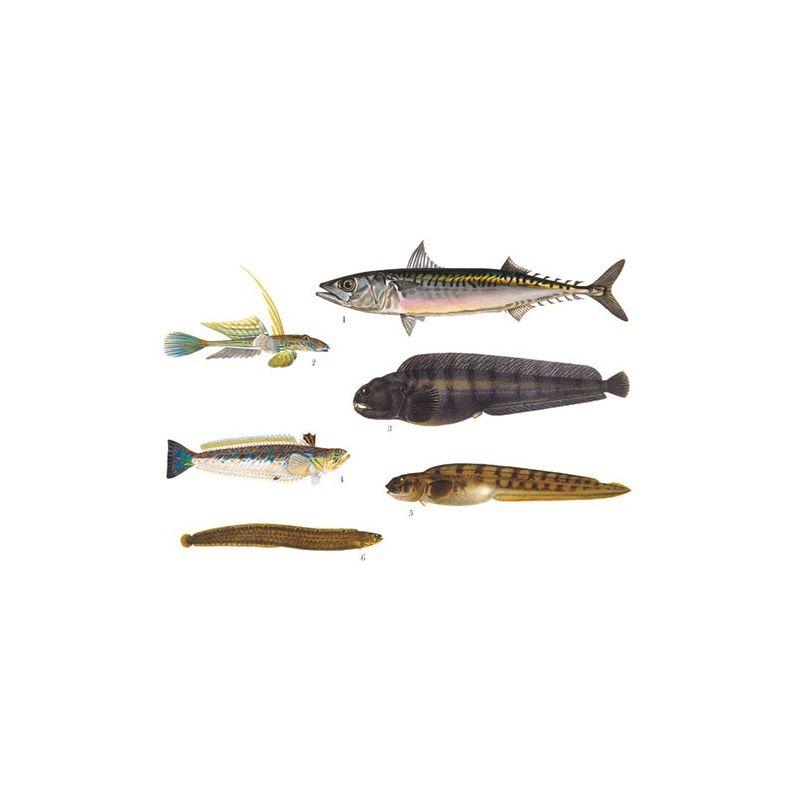 Abborrartade fiskar 2