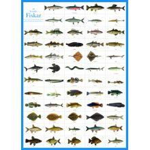 Svenska fiskar A4