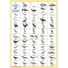 Svenska fåglar A4