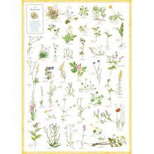 Svenska blommor affisch