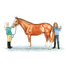 Hästens kroppsdelar A4