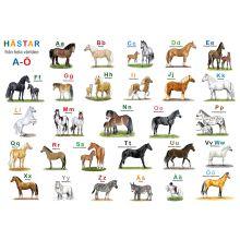Hästar från hela - Underlägg