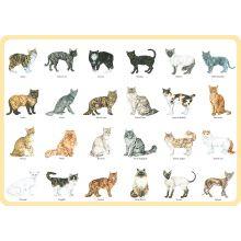 Katter underlägg