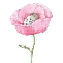 Lilla Kotten (Rosen)